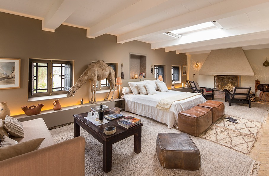 Camels Suite